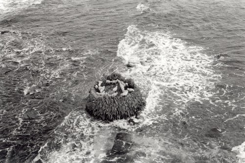 A group of sheep turn in a stone built raised enclosure while the sea lashes the base of the structure, black and white aerial photograph