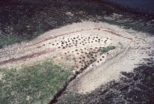 Aerial view of the tiop of a small island showing cormorant bird nests dotted around the point.