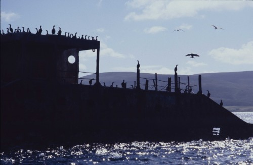 A crowd of shags gather on the hulk of a sunk blockship, both ship and birds are in sihouette against the shimmering sea, purplish hill and sky. The porthole of the wreck stares like an eye.