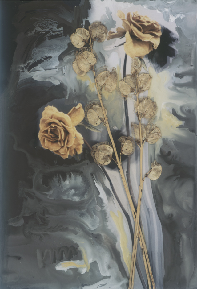 Pale dried roses on a background of painted greys, on top of the photograph lie dried small lantern-like buds, tight and papery