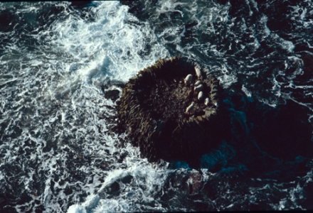 colour image of the stone built circular sheep fort, Rusk Holm, off Westray. This aerial photograph shows seven sheep in the fort safe above the frothing waves.