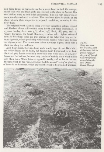 page from RJ Berry's book The Nartural History of Orkney with a photograph of the sheep fort by Gunnie Moberg.