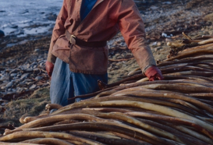 A man in an orange oilskin and blue dungarees and blue fisherman's cap stands proudly beside a huge pile of tangle stipes lying bent over a wall, behind him the shore and sea.