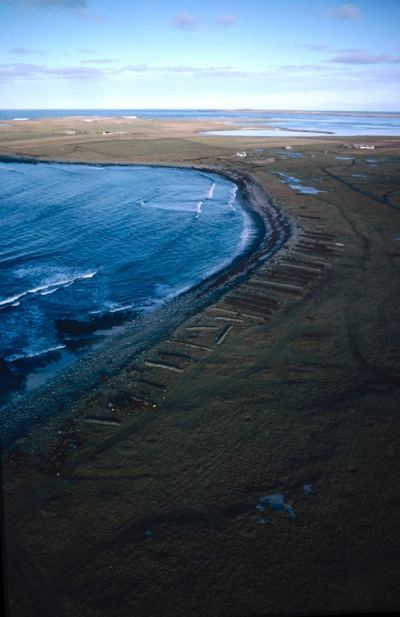 Aerial colour photograph showing the sweep of a shoreline scored with dozens of low stone walls for stacking seaweed, they look like a row of washed up timber sleepers lying on the shore.