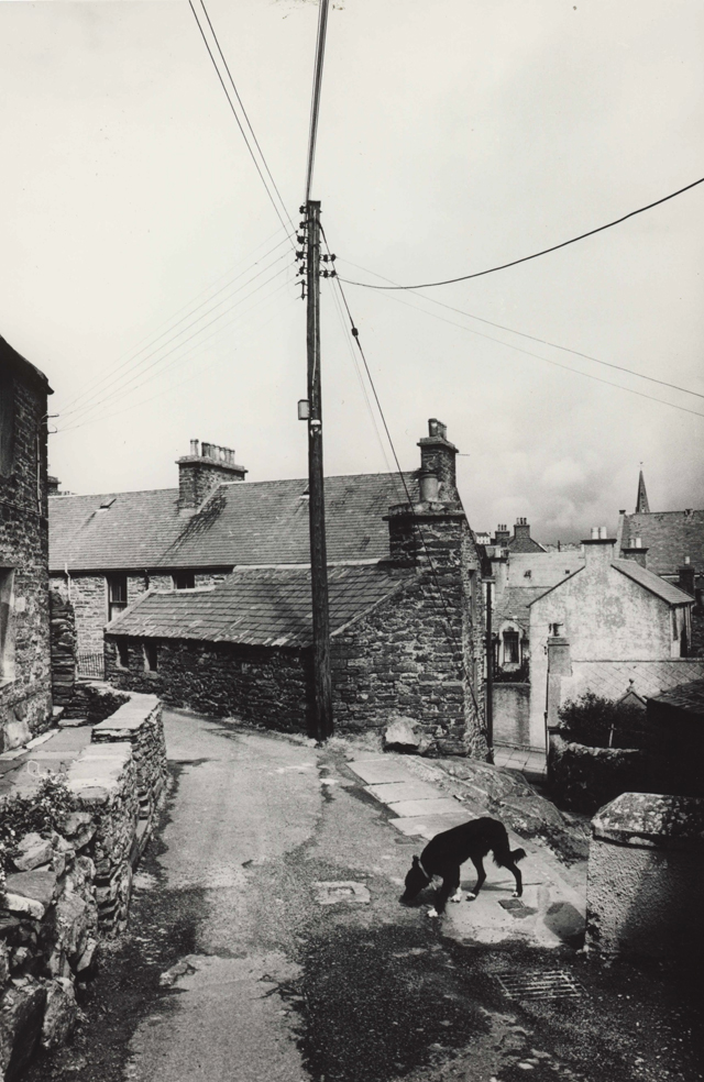Black and white image of a back street with stone built houses, roofs in the distnace, central to the image a pole with wires reaching in every direction looking like a weather mast. In the foreground a black dog with white paws sniffs at something on the ground.