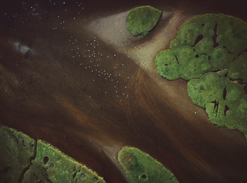 An aerial photograph of grassy islets in a muddy tracked rich soil with dots of sheep microscopic.