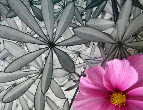 On top of a black and white worked image of leaves sits a shocking pink flowers drifting off the bottom left of the photograph.