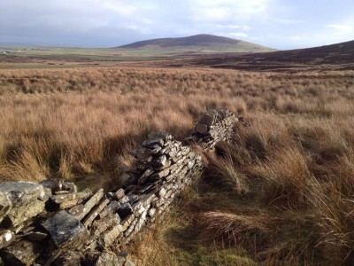 A moorland heath with the stone wall, damaged in parts, running through the wild grasses.