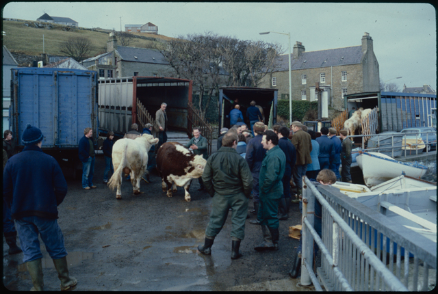 A busy image with cattle and people. The mood is quite relaxed with lots of discussion, farmers hands in boiler suit pockets as they look at the animals being loaded into lorries.