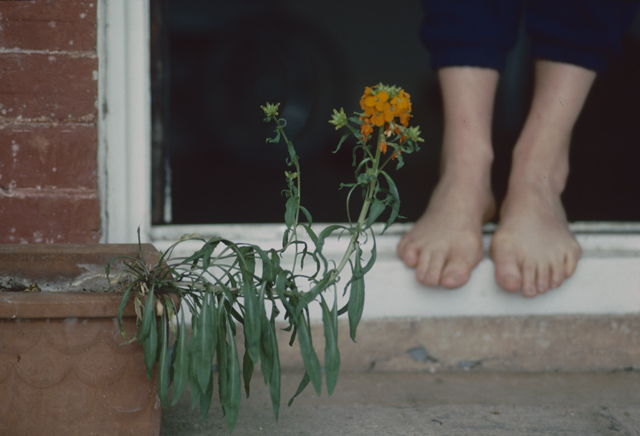 A red brick window frames the feet of a woman, a flower in a terracotta pot stretches itself across the frame.