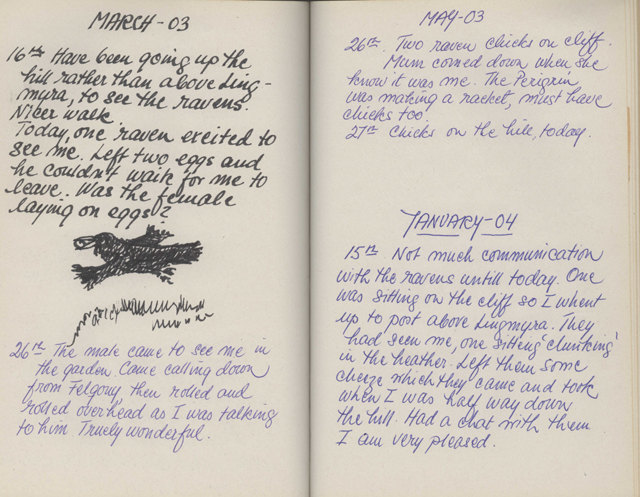 Pges from a hand written journal in blue and black ink, big handwriting and a sketch of a raven