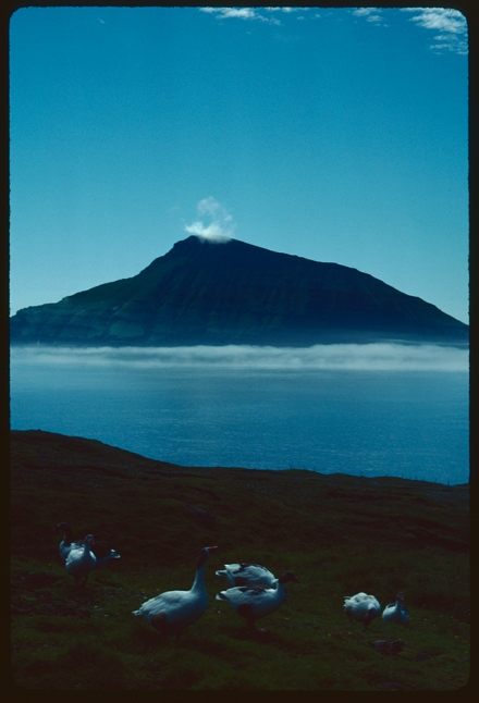 An island hangs mid frame topped by a small cloud and growing from sea fog. In the foreground seven geese sit and stretch on the grass, between them and the island a clear blue sea.