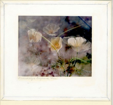 delicate cream flowers sway ghostily in this double exposure image. The image shows the artist's notes about the photograph including framing instructions.