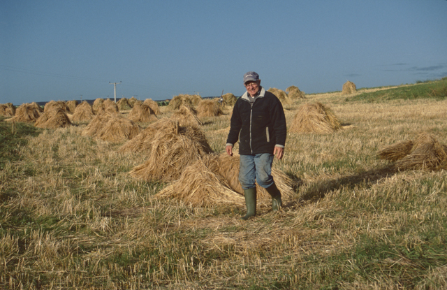A happy man strides through his harvest, hay stacks pile aroudn his field. They look like they have been stacked by hand, irregular but beautiful piles.