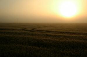 A low hazy sun slowly warms a ripening field.
