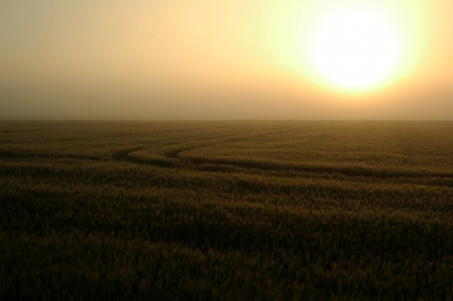 A low hazy sun slowly warms a ripening field.