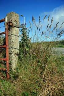 A gatepost holding a brick-red gate sit on the left of the image, the photograph however belongs to the spiking grasses growing to the height of the post.