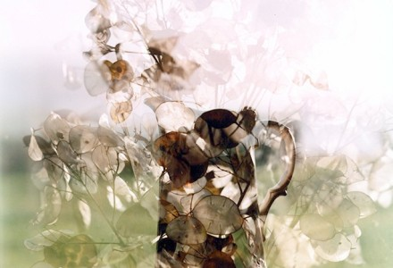 A double exposure of honesty in a vase, the transluscent seed heads creating the outline of the jug's handle.