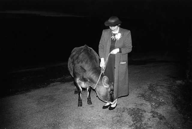 A finely dressed woman looks down at her tethered cow who sniffs her foot, black and white photograph taken using flash so that the couple appear out of the black.